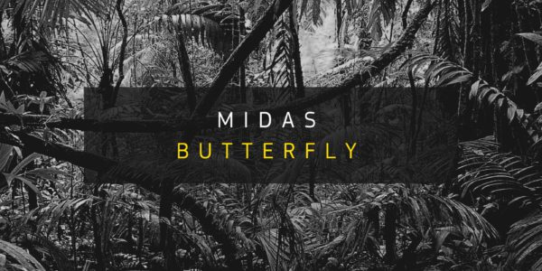 Citate Forms — Midas Butterfly